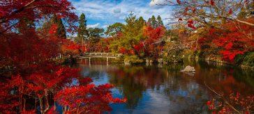 Park Japoński
