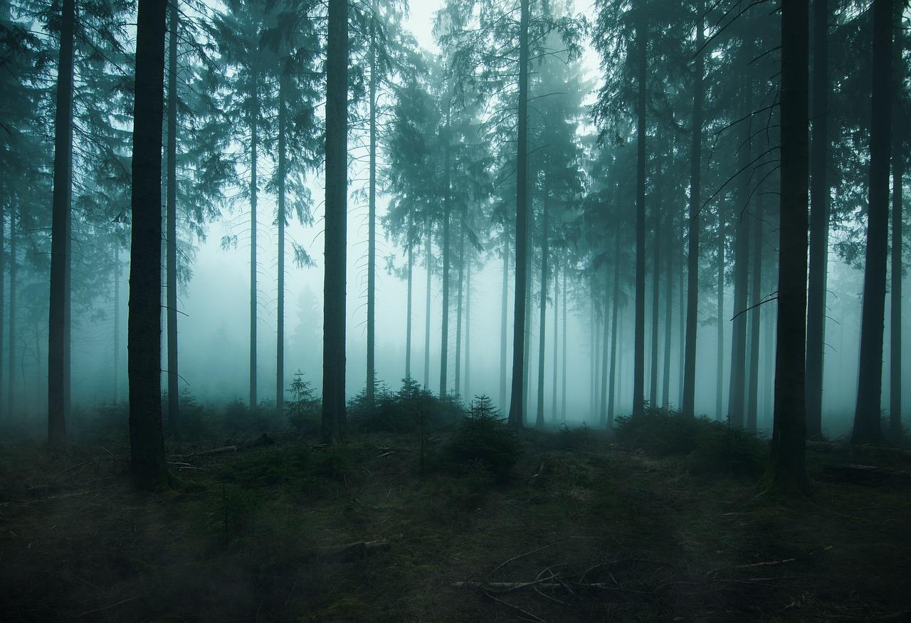 Japoński las samobójców